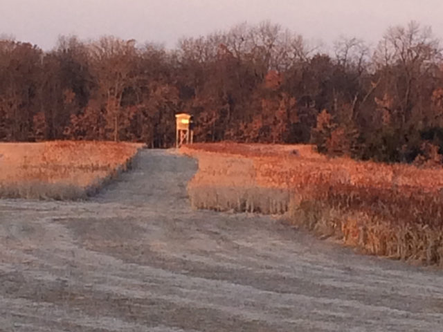 Deer Stand Fall